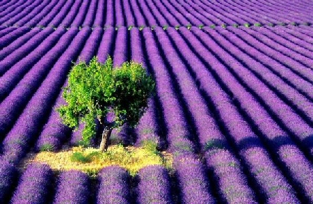 Clients Personal Testimonials . lavenderfields&tree